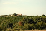 Marche Vineyards