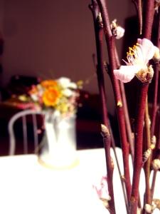 Ancona Flower Blossoms