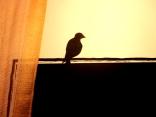 Chalkboard Bird