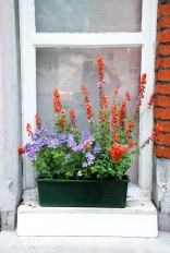 BruggesOrangeFlowersinWindow