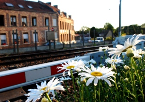 StOmerFlowersTrainTracks