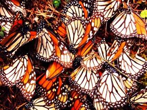 DeadButterflies