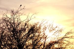 SunsetTreeBird